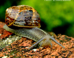 Who are you looking at ? (Steve-h) Tags: rain wall eyes europa europe bricks shell snail eu explore finepix fujifilm bushes pictureperfect naturesfinest blueribbonwinner steveh abigfave s9600 anawesomeshot megashot platinumheartaward