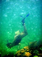 snorkeling belize reefs - Kat Cure Guide in Belize 2008 Oceanic Society