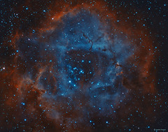 Rosette Nebula in the Hubble Palette (Martin_Heigan) Tags: rosettenebula widefield hubblepallete hos hst caldwell49 ngc2237 openstarcluster hydrogenalpha oxygeniii ha oiii narrowband sgp pi astronomy astrophysics astrograph telescope gso newtonian reflector martin heigan astrophotography celestron avx nebula bicolor bicolour deepskyobject dso space science physics canon 60da mhastrophoto october2016 sequencegeneratorpro pixinsight astroimaging pixelmath astrometrydotnet:id=nova1942341 astrometrydotnet:status=solved flickrexplore explore astrometry hubblepalette electromagneticspectrumoflight nm light wavelength ir spectrum spectralline spectra photography amateurastronomy backyardastronomy southafrica africanskies southernskies africa sterrekunde caldwell50 lightyears milkyway ngc2238 ngc2246 deepspace ngc2244 hydrogen