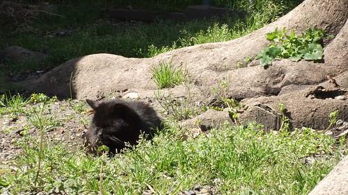 Today's Cat@2010-04-10