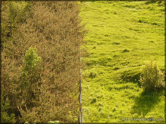 P1150428_fence