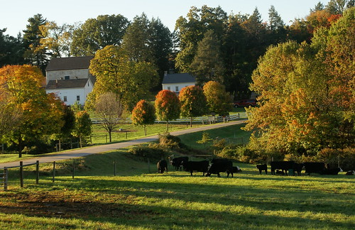 pastoral Philadelphia