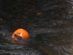 Broken Pumpkin in Canal