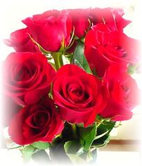 一把紅玫瑰