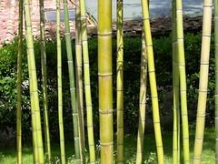ortobotanico 303 (blum1) Tags: alberi fiori piante ortobotanico