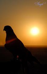 ..     (^ Angel ^) Tags: love me sad kuwait       kvwc kuwaitvoluntaryworkcenter  kuwaitvwc