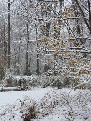 Surprise snowfall