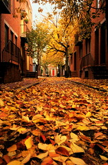the red door (moocatmoocat) Tags: autumn red philadelphia leaves contest perspective moo lan cal badge cs ww lan3 268 lan2 cal3 superaplus aplusphoto cal2