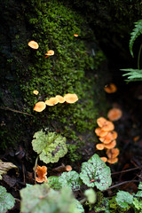 Orange Mushrooms