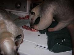 Stewie's rib