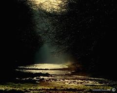 A MYSTERIOUS PLACE (Edward Dullard Photography. Kilkenny, Ireland.) Tags: kilkenny ireland photographic emeraldisle dullard blueribbonwinner  ultimateshot excellentphotographerawards edwarddullard societyedward