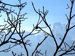 Concarena (Italian Film Photography) Tags: mountains alberi montagne vallecamonica s6500fd s600fd concarena