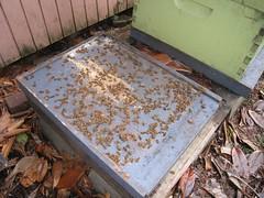 Beekeeping 2716
