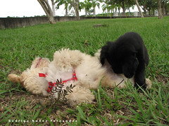 Placer cachorril (rodfires) Tags: dog lana sex play y venezuela bolivar porno sexo perro grama axe doggy cachorros placer perrito mamada perritos jugando partes extasis guayana ordaz chachorro puero intimas ecomuseo genitales lamida
