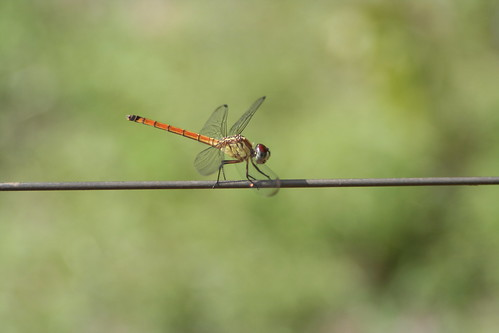 Resting Dragon Fly