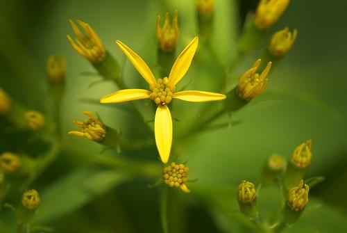 20080601花