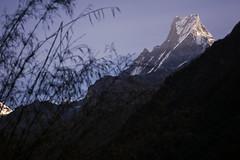 (toeytoeytoeytoeytoey) Tags: travel trekking annapurna basecamp base came sanctuary landscape mountain nature hiking trek adventure winter nepal aisa himalaya himalayas abc machhapuchchhre