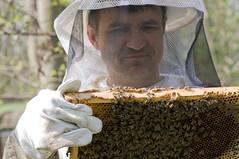 Kontrolle der Bienenbrut 4