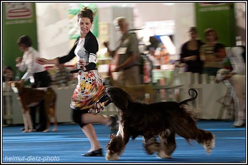 FCI Jahrhundertsieger Ausstellung Dortmund: BOB/BIS Afghanischer Windhund