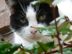 Silvestro (cineciak63) Tags: fauna natura felino gatto montella irpinia