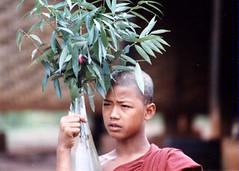 Novice monk by tree