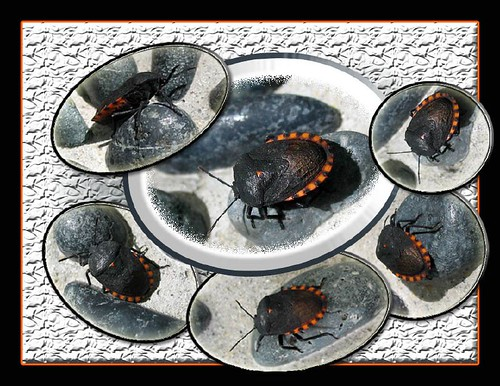 The final Photo Collage of 6 gorgeous bugs, easily created in Photoshop CS2