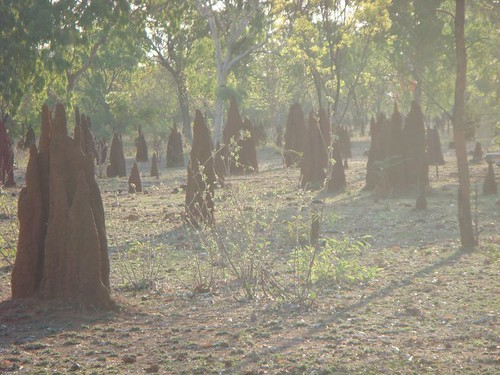 Termite mounds in Mataranka.