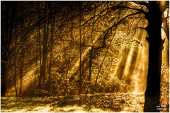 Sefton Park Mist III (petecarr) Tags: park mist fog liverpool landscape earlymorning seftonpark