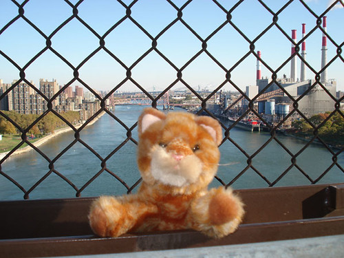 Bridge_Kitty_GothamistPhoto_2007_11_catqnsbrg1