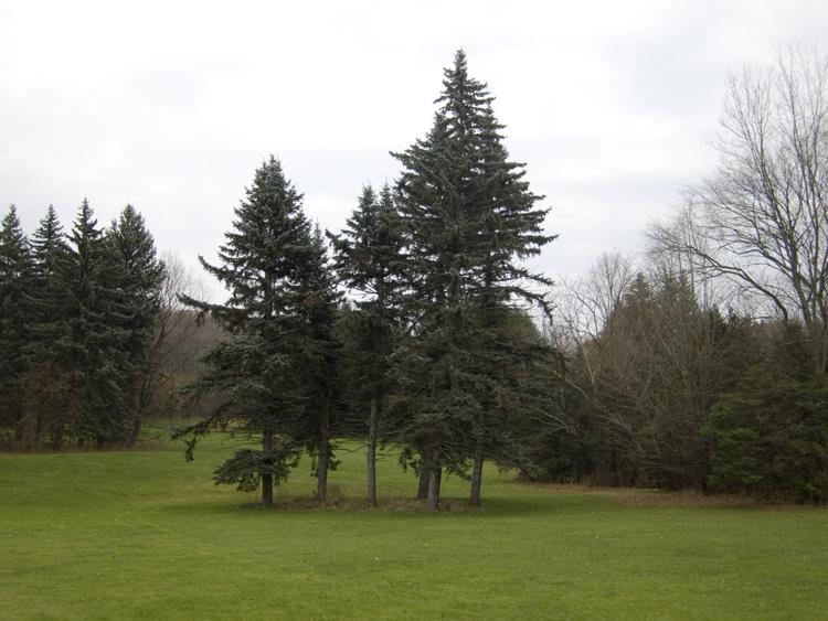 spencertown trees