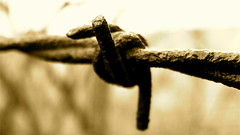 Barbed Wire and Rust (mightyquinninwky) Tags: old monochrome sepia rural fence pod backyard rust dof bokeh decay kentucky award barbedwire pow invite smalltown westernkentucky unioncountykentucky morganfieldkentucky superbmasterpiece 1on1photooftheweek thebluegrassstate 1on1photooftheweekdecember2007 jasonpresser 11223344556677 bestofformyspacestation