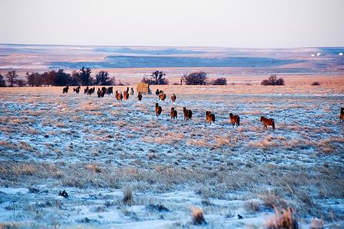 Feeding Horses 020