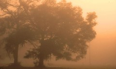Golden Fog (gatorgalpics) Tags: morning mist fog golden quiet sos hushed diamondclassphotographer bestminimalshot
