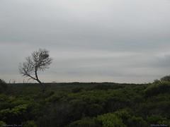 I Stand Alone (Epidaetia) Tags: australia melbourne greatoceanroad