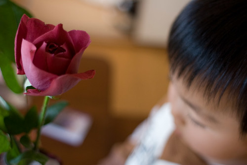 a kid and a rose