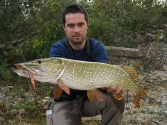 pike catch&release (helti) Tags: fishing pike pikefishing