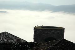 Pronti al decollo (Fausto Basile) Tags: italia torre natura basilicata uccelli volo viaggi colombi escursioni picerno