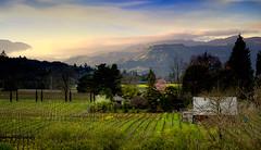 Evening settles into Napa Valley (Abe K) Tags: sunset mountains landscape evening vineyard nikon wine country d2x valley napa vista grape golddragon wonderfulshots