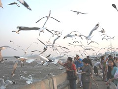 feed Seagull At Bangpoo - Samutprakarn
