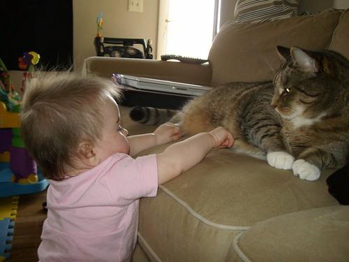 baby vs cat 4