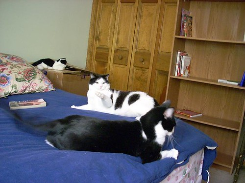 Dewey and Penguin, both on the bed!