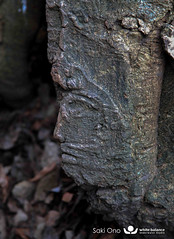 Sacred Tree (Lago Albano, Castel Gandolfo) (Saki Ono) Tags: castel gandolfo castelgandolfo sacredtree roma lagoalbano italy italia face tree