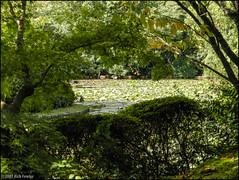 Ryoanji Grounds (richfowler) Tags: water japan temple pond kyoto    ryoanji ryoanjitemple     coolpixp5100