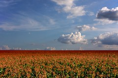 Milharal - Corn fields (eduhhz) Tags: cy challengeyouwinner a577