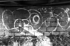 legua... (leguaninvasion) Tags: bird 89 throwup leguan 2011 outliner