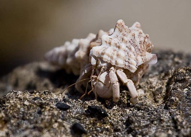 crab 5