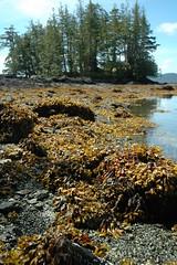orange shore