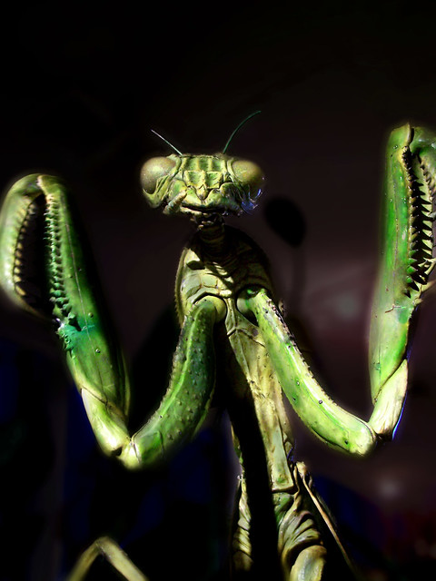 The Insect God Image