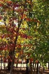 Alabama Autumn II