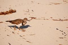 DSC_5371 (vaughnscriven) Tags: travel sea sky seagulls beach birds fun island caribbean jetski